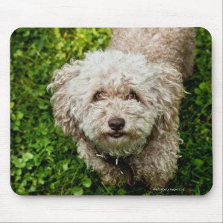 Small dog looking up at camera mouse pad