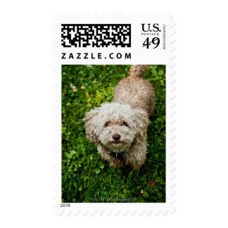 Small dog looking up at camera postage