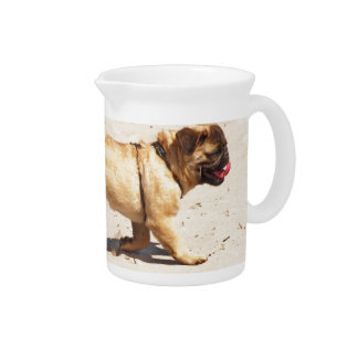 small dog pug baby playing in the summer pitcher