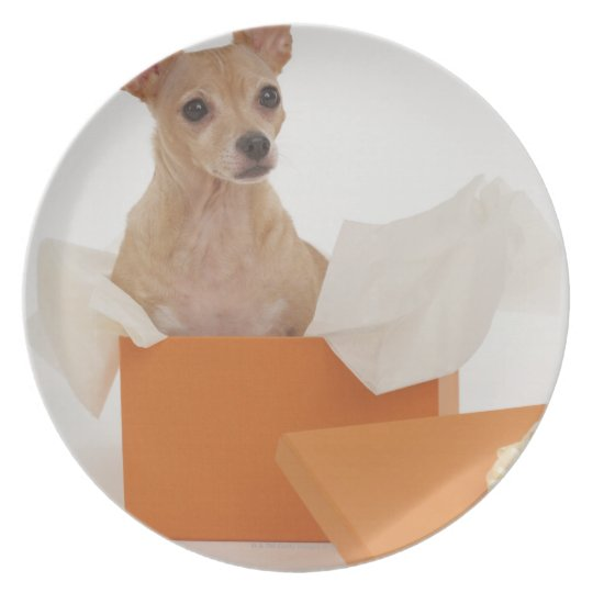 Small dog sitting in gift box melamine plate