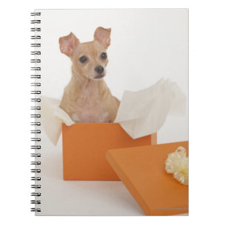 Small dog sitting in gift box notebook