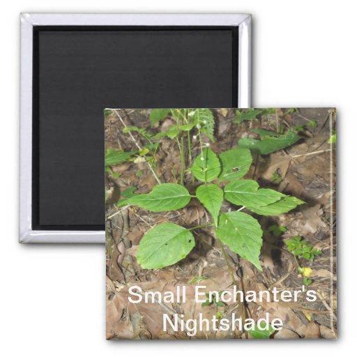 Small Enchanter's Nightshade Magnet