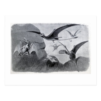 Small Flying Dragons Postcard