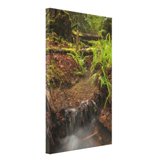 Small forest creek stretched canvas prints