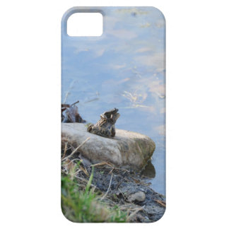 small frog sitting on back of bigger frog iPhone SE/5/5s case