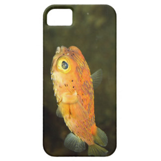 Small Golden Pufferfish iPhone 5 Covers