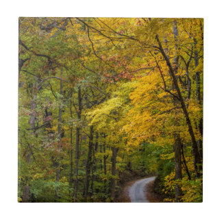 Small Gravel Road Lined With Autumn Color Ceramic Tile