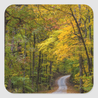 Small Gravel Road Lined With Autumn Color Sticker