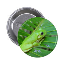 Small Green Frog Button