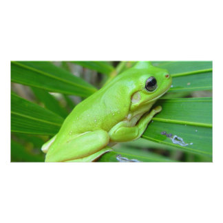 Small Green Frog Card