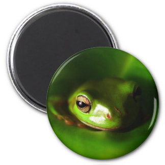 small green frog in green leaf fridge magnets