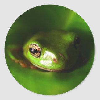 small green frog in green leaf round stickers