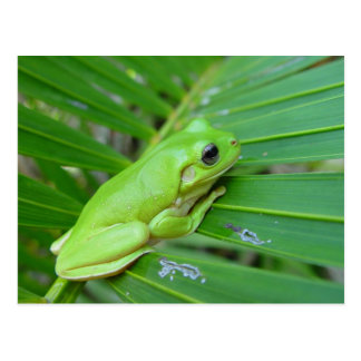 Small Green Frog Post Cards