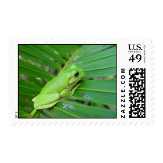 Small Green Frog Postage Stamp