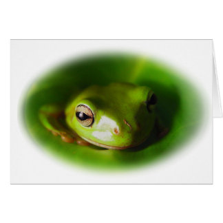 Small Green Frog Watching You Greeting Card
