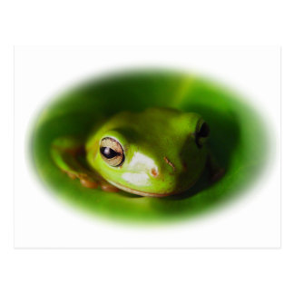 Small Green Frog Watching You Postcard