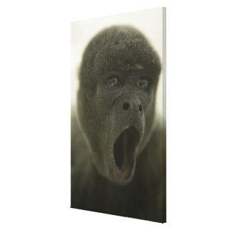 Small grey monkey, outdoors, portrait canvas prints