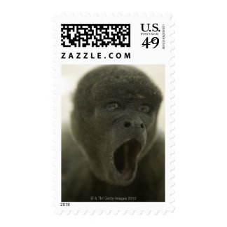 Small grey monkey, outdoors, portrait stamp