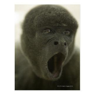 Small grey monkey, outdoors, portrait postcard