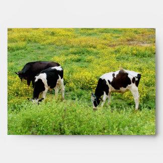 Small herd of bulls envelopes