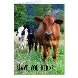 Small Herd of Three Cows Greeting Card