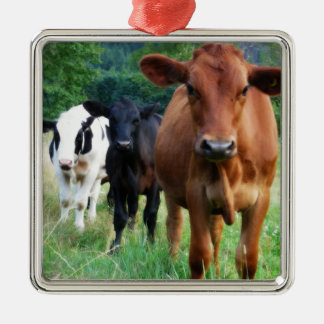 Small Herd of Three Cows Metal Ornament
