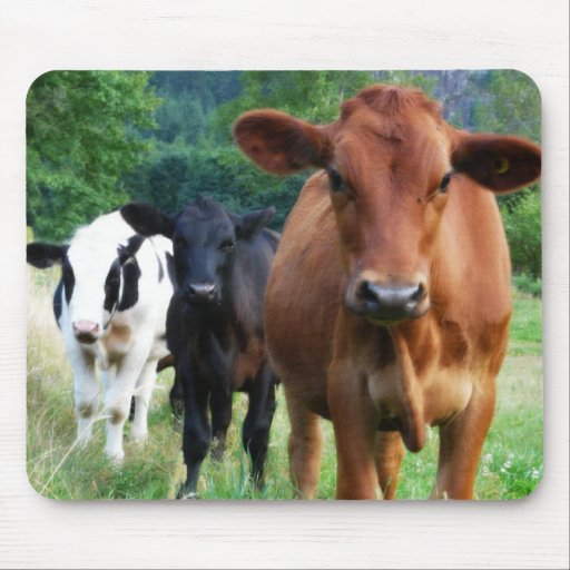 Small Herd of Three Cows Mouse Pad