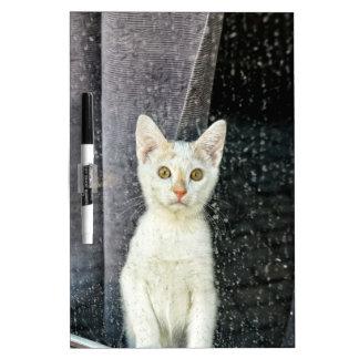 Small kitten in the window dry erase board