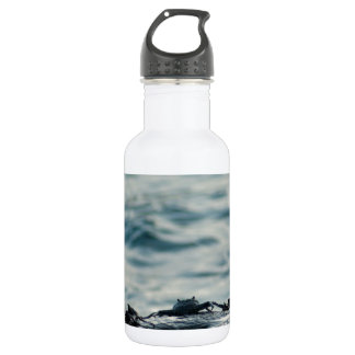 Small marine crabs on a rock stainless steel water bottle