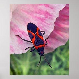Small Milkweed Bug Poster