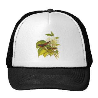 Small Minivet Mesh Hat