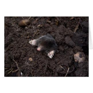 Small mole card