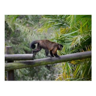 small monkey running across railing postcard