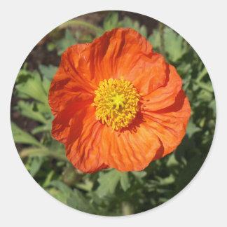 Small Orange Poppy Stickers