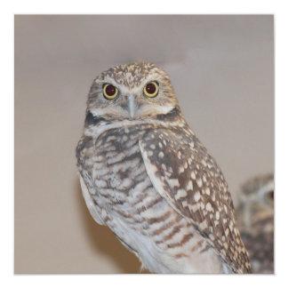 Small Owl Invitation