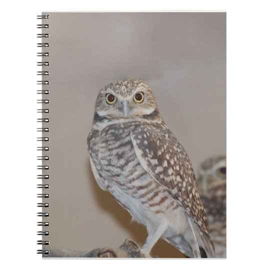 Small Owl Spiral Notebook