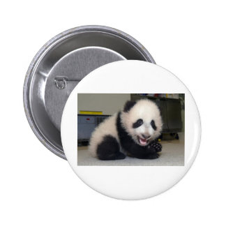 small-panda-cub button