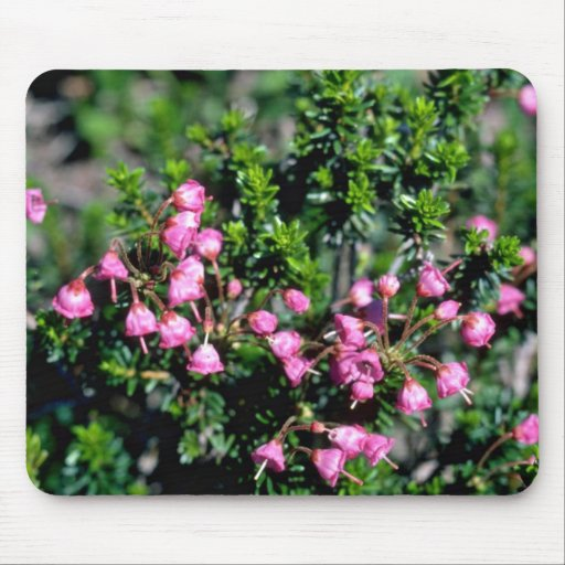 Small Pink Bell-Shaped Flowers flowers Mouse Pad