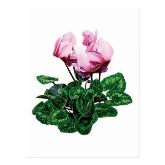 Small Pink Cyclamen Postcard