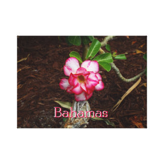 Small Pink Flower Canvas Print