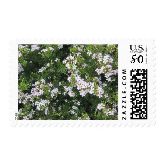 Small Pink Flowers Postage