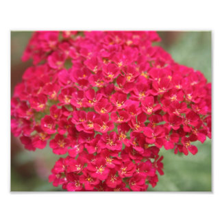 Small Pink Flowers with Yellow Closeup Photo Print