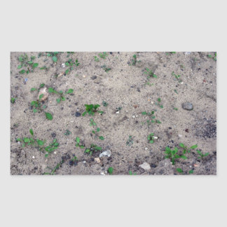 Small Plant Growing On Sand Rectangular Sticker