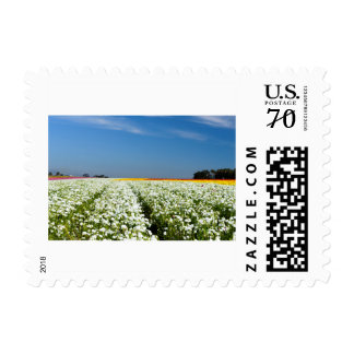 Small postage stamp
