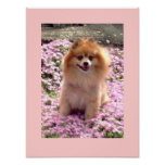 Small Poster | Marley Pomeranian Pink Flowers