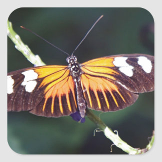 Small Postman Butterfly Square Sticker