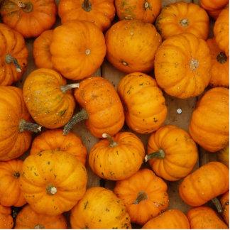 Small Pumpkins Photo Sculptures