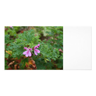 small purple flowers against green foliage plant photo cards