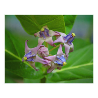 small purple flowers against green leaves letterhead