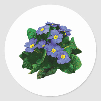 Small Purple Primroses Stickers